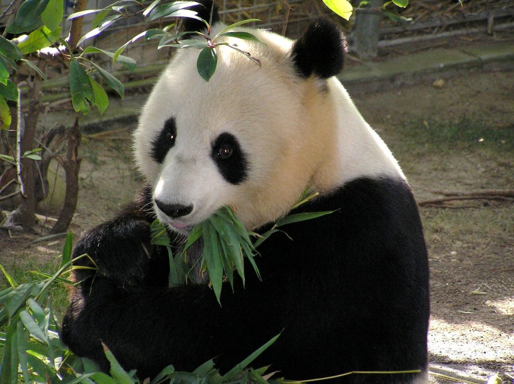 Виенската зоологическа градина Шьонбрун