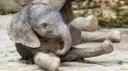 новороденто слонче